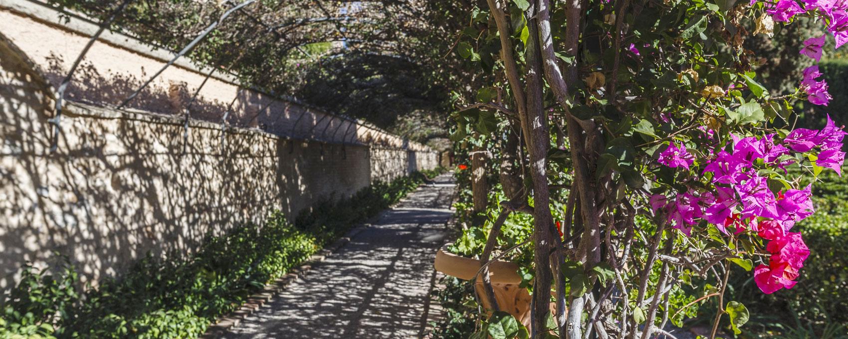 Marca linealmente el límite oeste del jardín, cerrando el parterre viejo y la Rosaleda. Es una bóveda vegetal formada por una estructura metálica apoyada en el muro de cerramiento del jardín sobre la que se apoya un entramado de vistosas buganvillas.
