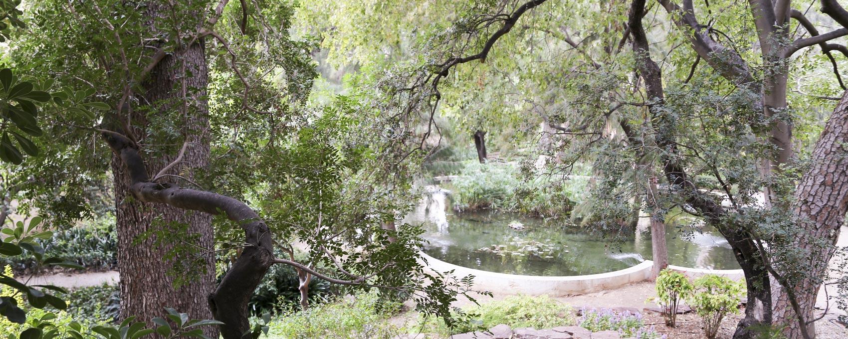 """Ubicado al pie de """"la montañita"""", rodeado de diferentes árboles constituye el centro del bosquete y capta la atención de este entorno."""